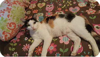 Calico Cat for adoption in Wichita, Kansas - Pebbles