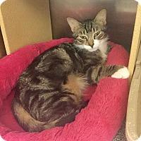 Adopt A Pet :: Orion - Colmar, PA