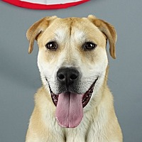 Adopt A Pet :: Lucy - Columbia, IL