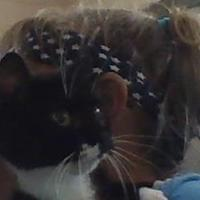 Adopt A Pet :: demi - Henderson, KY