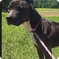 Adopt A Pet :: Sammi - Hillsboro, OH