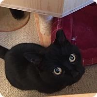 Adopt A Pet :: Stella - Rochester, NY