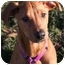 Photo 1 - Doberman Pinscher/American Pit Bull Terrier Mix Puppy for adoption in Phoenix, Oregon - Lizzy