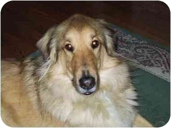 Collie Mix Dog for adoption in Wilmington, Delaware - Caesar