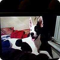 Adopt A Pet :: Sparky - Garwood, NJ