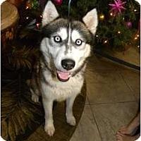 Adopt A Pet :: Mala - Mission Viejo, CA