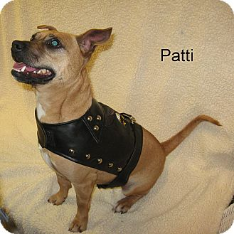 Chihuahua/Terrier (Unknown Type, Small) Mix Dog for adoption in Slidell, Louisiana - Patti