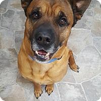 Adopt A Pet :: Rocky (Brown) - Fennville, MI