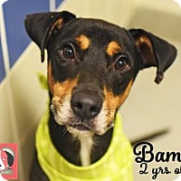 Adopt A Pet :: Bama - Lonely Heart - Gulfport, MS