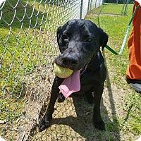 Adopt A Pet :: Mason #3 - Midlothian, VA