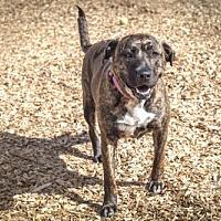 Adopt A Pet :: Sophie - 27176 - Petaluma, CA