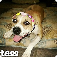 Adopt A Pet :: Tessa - Phoenix, AZ