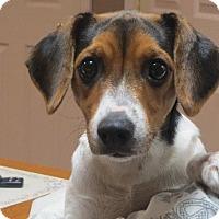 Adopt A Pet :: Paisley - Salem, NH