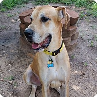 Adopt A Pet :: Worf - Broomfield, CO