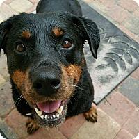 Adopt A Pet :: Karolina - Seffner, FL