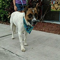 Terrier (Unknown Type, Medium) Mix Puppy for adoption in Maquoketa, Iowa - Sanders
