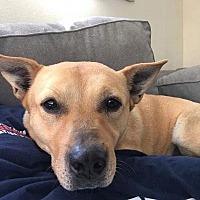 Adopt A Pet :: Albert - Los Angeles, CA