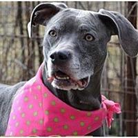 Adopt A Pet :: Sheba - Tipp City, OH