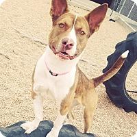 Adopt A Pet :: Lulu - Greeley, CO
