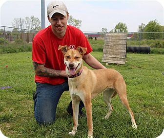 Mixed Breed (Medium) Mix Dog for adoption in Elyria, Ohio - Charlie