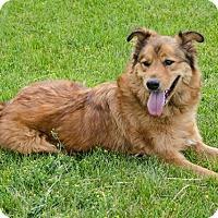 Retriever (Unknown Type) Mix Dog for adoption in Sandusky, Ohio - VANCE