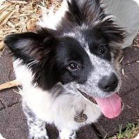 Adopt A Pet :: Riley - Houston, TX