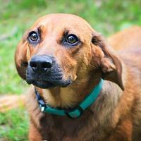 Adopt A Pet :: Tom - Harrisburg, PA