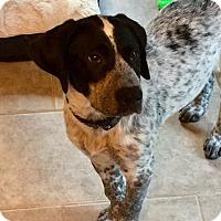 Adopt A Pet :: Sheridan - bridgeport, CT