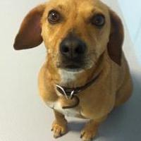 Adopt A Pet :: Ruger - Muskegon, MI