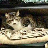 Adopt A Pet :: Janne - Merriam, KS