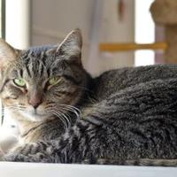 Adopt A Pet :: Sadie - Cooperstown, NY