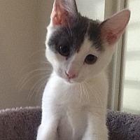 Adopt A Pet :: Kenmore - Glendale, AZ