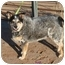 Photo 3 - Australian Cattle Dog Dog for adoption in Phoenix, Arizona - Andy