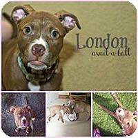 Adopt A Pet :: London - WARREN, OH