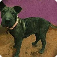 Adopt A Pet :: Lexi - ....., FL