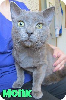 Domestic Shorthair Cat for adoption in Menomonie, Wisconsin - Monk