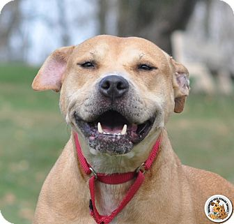 American Staffordshire Terrier Mix Dog for adoption in Eighty Four, Pennsylvania - Millie