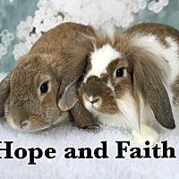 Adopt A Pet :: Faith and Hope - Auburn, CA