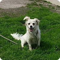 Adopt A Pet :: Kramer - Paris, IL