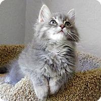 Adopt A Pet :: Wyatt - Davis, CA