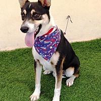 Adopt A Pet :: Pinto - San Diego, CA