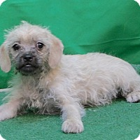 Adopt A Pet :: Mable - San Diego, CA