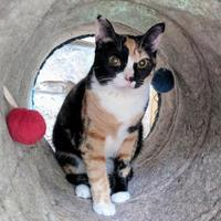 Adopt A Pet :: Holly - New Freedom, PA