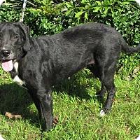 Adopt A Pet :: Polly - Oakland, AR