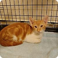 Adopt A Pet :: Philip - Umatilla, FL