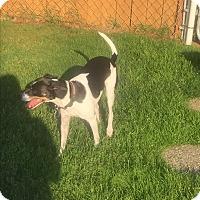 Adopt A Pet :: Panic - Lynnwood, WA