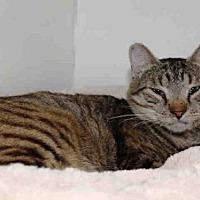 Adopt A Pet :: ROCKY - Hampton Bays, NY