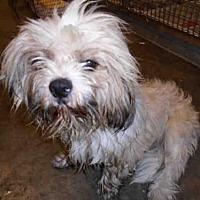 Adopt A Pet :: A1728732 - Los Angeles, CA