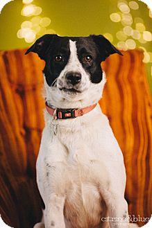 Border Collie Mix Dog for adoption in Portland, Oregon - Windy