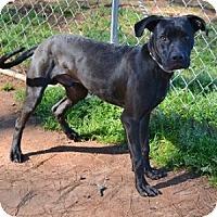 Adopt A Pet :: Indy - Athens, GA